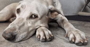 NutriFlex Arthritis Supplement For Dogs