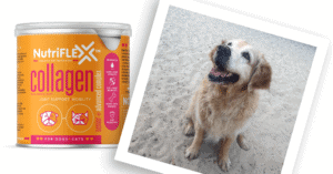 NutriFlex™ Hello Happiness with Purdey The Dog