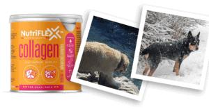 Jakkals and Jinx love NutriFlex Advanced Pet Collagen